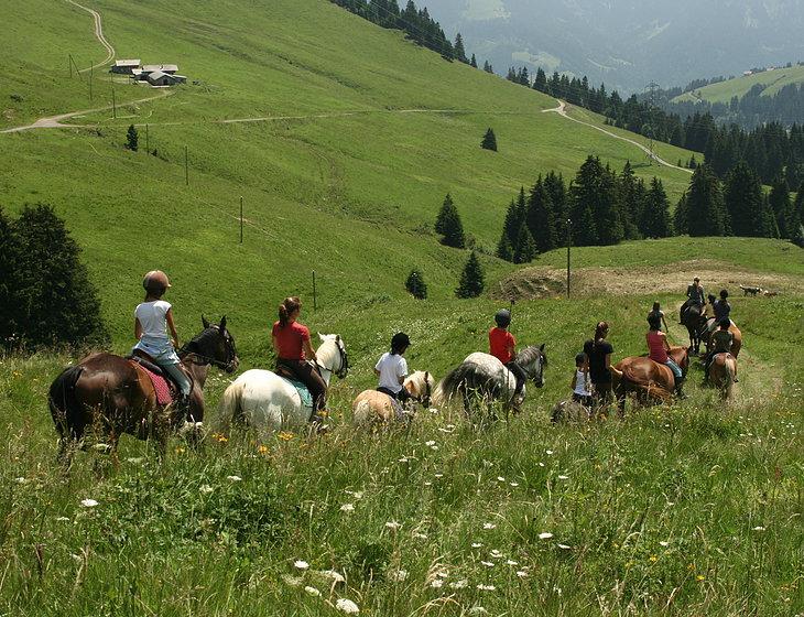 horse;lavey;summer;portes-du-soleil;mountain